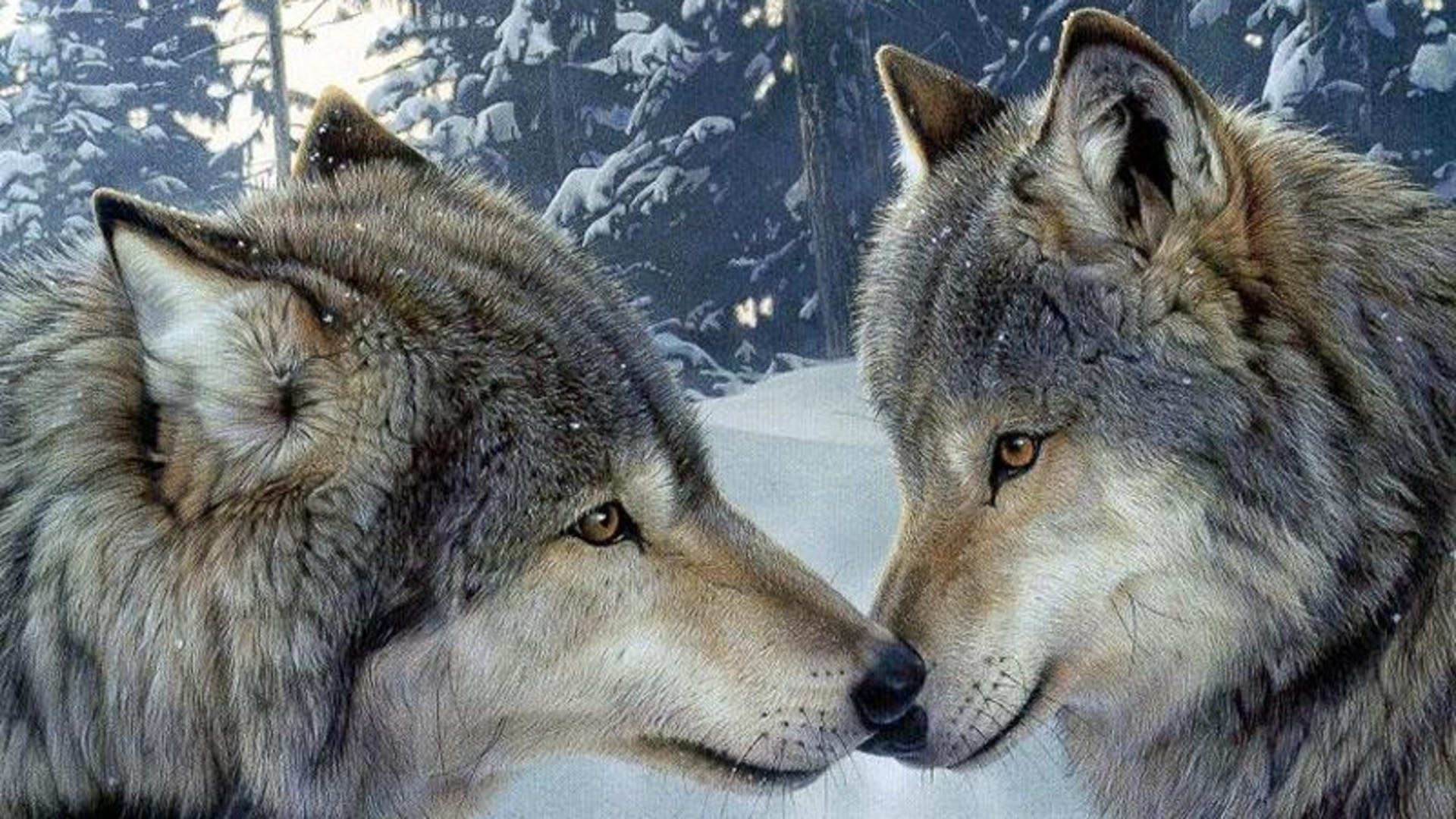 winter_snow_forests_animals_wildlife_wolves_Wallpaper_1920x1080_www.wall321.com